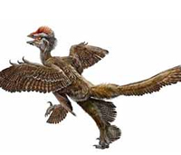 Найден четырехкрылый динозавр
