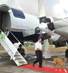 Собачий самолет