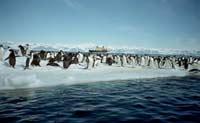 Антарктида была теплой
