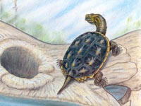Черепахи пережили великое вымирание