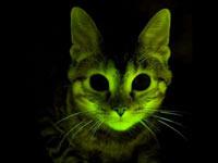 Здоровые кошки светятся зеленым