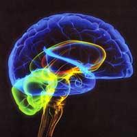 Мозг людей усыхает