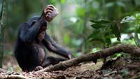 У обезьян есть культурные традиции