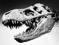 Динозавры вымерли из-за отставания в сексе