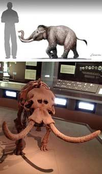 Карликовые мамонты