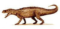 В раскопках найден скелет древнего крокодила