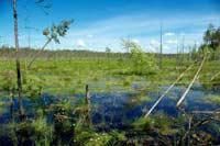 Как следить за болотом