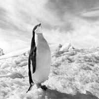 Древние пингвины помогли растениям