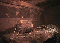 Найдены останки Ноева ковчега