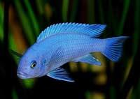 Долговременная память у рыб