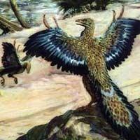 Археоптерикс возможно все-таки летал