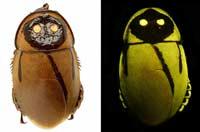 Светящиеся тараканы