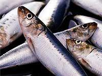 Рыба несет не только полезные витамины