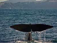 Древнейший кит