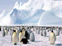Антарктида нагревается