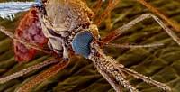 Как отпугнуть комаров