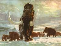 Человек не убивал мамонтов