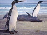 Древние пингвины были крупнее