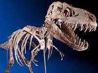 Динозавра не продают