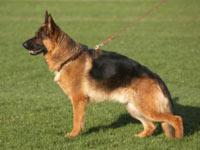 Собаки лучше ДНК-тестирования