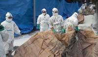 Ученые вывели новый разрушительный вирус
