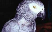 Умные попугаи
