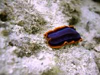 Ген бессмертия есть у червей
