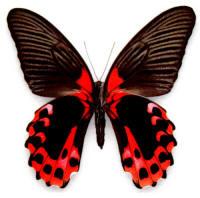 Робот бабочка не помог биологам