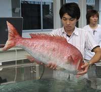 Роботы-рыбы будут следить за экологией