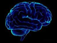Люди полностью используют мозг