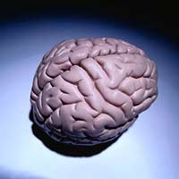 Мозг человека выработал ресурс