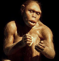 """Обнаружено """"недостающее звено"""" между человеком и обезьяной."""