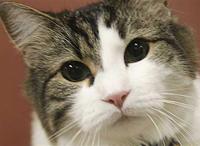 Открыта тайна кота, предсказывающего смерть
