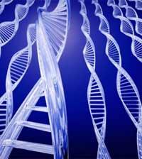 Гены мутируют под воздействием среды