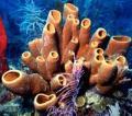 Гены человека сходны с генами морской губки