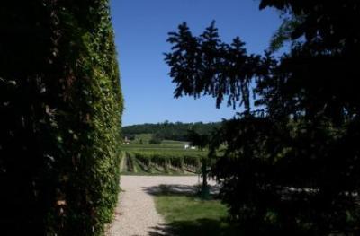 Продажа виноградника во Франции