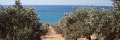 Земельные участки на Крите