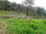 Участок земли в Прчани