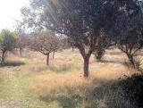 Земельный участок в Греции