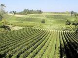 Виноградник Франции